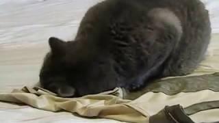 Кот и футболка
