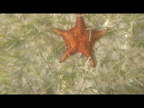 Starfish Point - Grand Cayman Island - Go Pro HD - Sept 23rd 2016