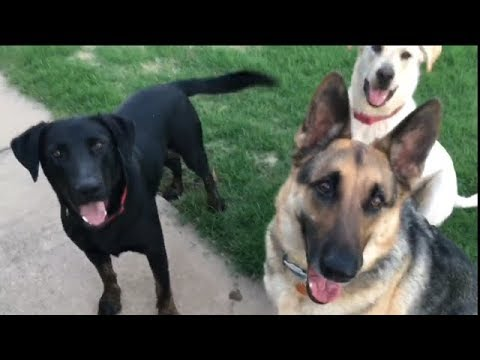 Odin and the Labs
