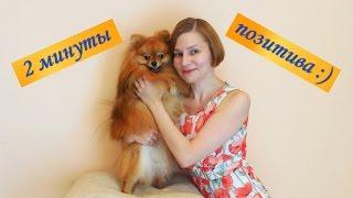 """2 минуты философского позитива от Юли Володиной: стих """"Собака"""" :)"""
