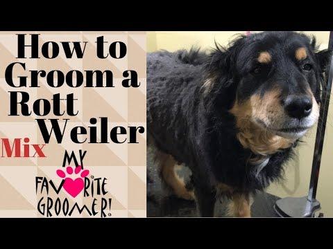 Grooming a Rottweiler Mix