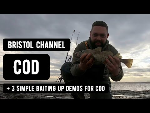 First Cod Of The Winter......Bristol Channel Cod Fishing & Baiting Up Demos.