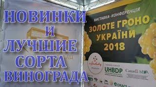 Золотая гроздь Украины 2018, НОВИНКИ ВИНОГРАДА И ЛУЧШИЕ СОРТА