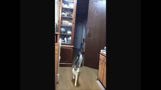 家猫修行中のななみちゃんはこうしてよくあとむくんに鬼ごっこを仕掛けます。