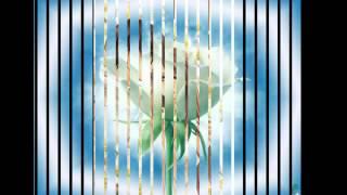 В.Королёв И.Круг-Букет из белых роз(Эльвира)