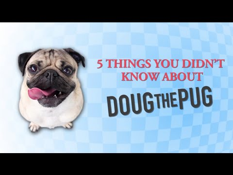 5 Things You Didn't Know About Doug The Pug