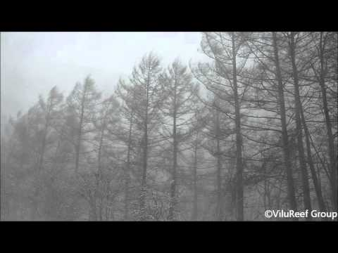 Snowstorm 60 min/Nature Sounds Winter
