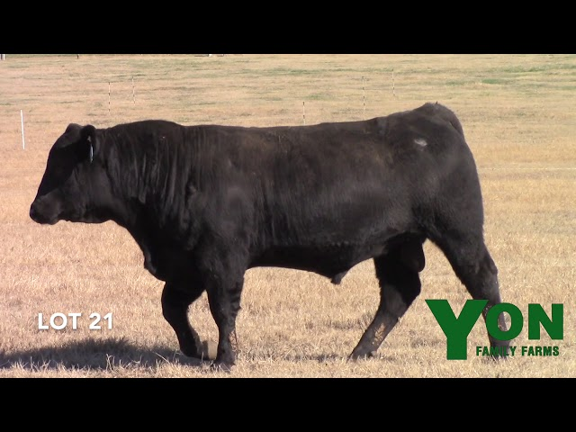Yon Family Farms Lot 21