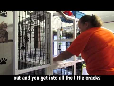 EASEL Animal Rescue League Training Video: Cleaning Cat Cages