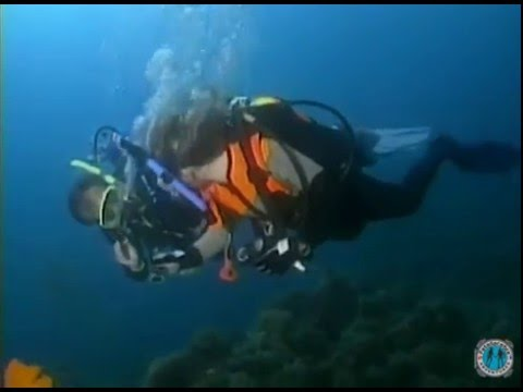 Programa PADI Adventures In Diving - Introdução