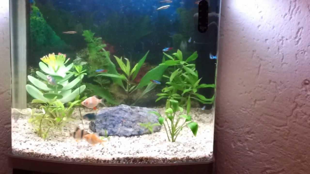 aquarium 40l fische. Black Bedroom Furniture Sets. Home Design Ideas