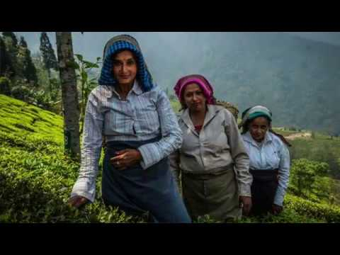 Oikocredit invests in abandoned tea estates in India