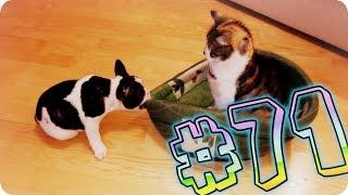 Приколы с животными №71   Кот занял место собаки  Смешные животные  Animal videos