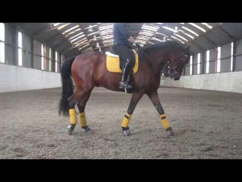 Matt Burnett Clinic with Furst Romanoff (Romy) 2010 176cm Gelding