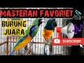 Masteran Murai Batu Cucak Hijau Dan Burung Burung Juara  Mp3 - Mp4 Download