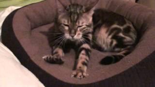 кот очень классно чешет когти