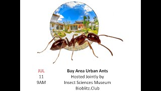 Bay Area Urban Ants