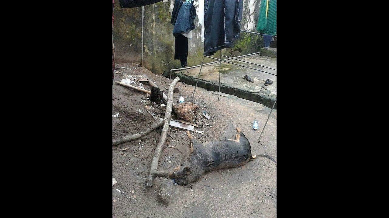 Download Nigerian Military Massacre At Home of Nnamdi Kanu