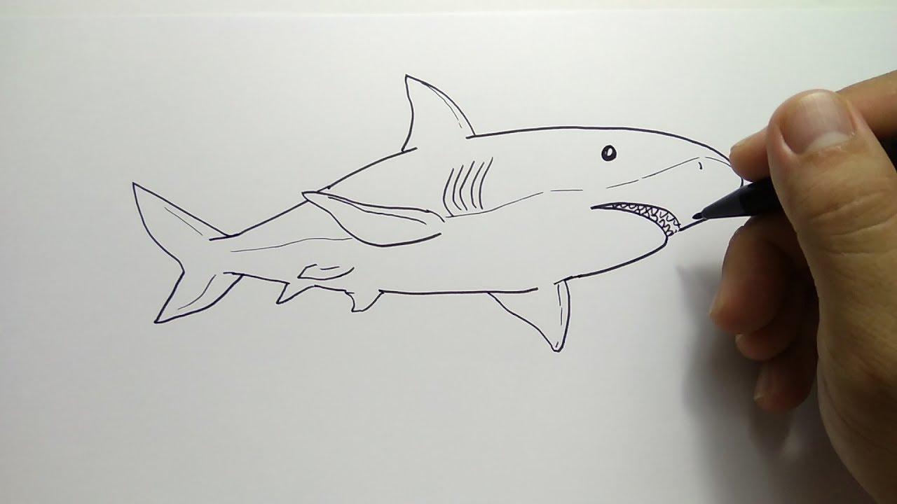 cara menggambar hiu berenang - YouTube