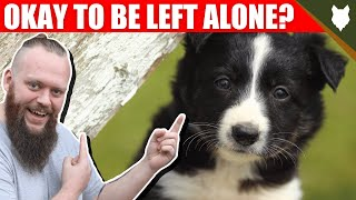 Can a BORDER COLLIE be left alone?
