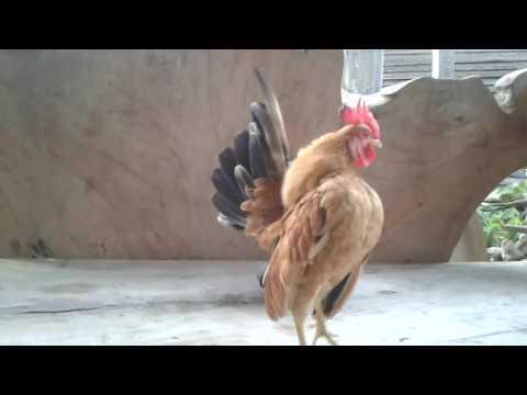 ไก่ซารามอ ทองหล่อบ้านสวน