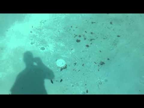 Hayward shark Vac robot pool cleaner
