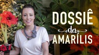 Amarílis – Como Plantar E Cuidar Da Tulipa Brasileira