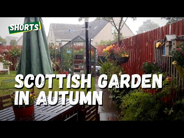 Scottish Garden Autumn Rain - The Kitchen Garden with Eli and Kate #shorts