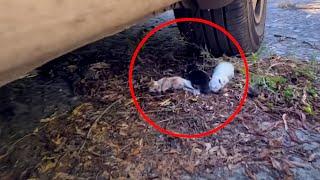 타이어 밑에서 발견된 죽기 직전의 새끼 고양이들....