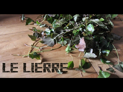Hiver (Winter) - Le lierre (Ivy) - Shampoing et lessive (Shampoo and laundry)