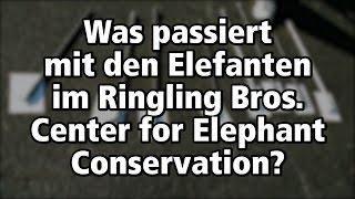 Was passiert im Elefanten-Center des größten Zirkus der Welt? / PETA