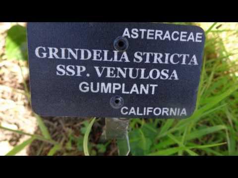 San Francisco Botanical