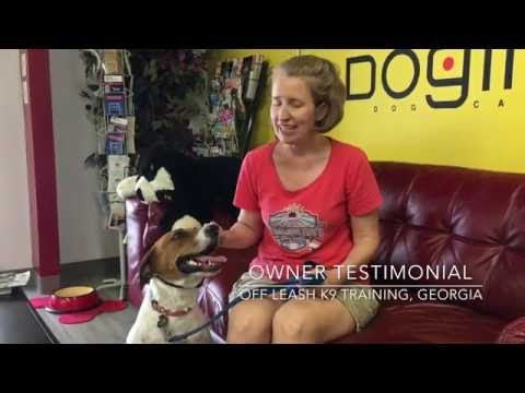 Owner Testimonial | English Setter-Hound Mix | Off Leash K9 Training, Georgia