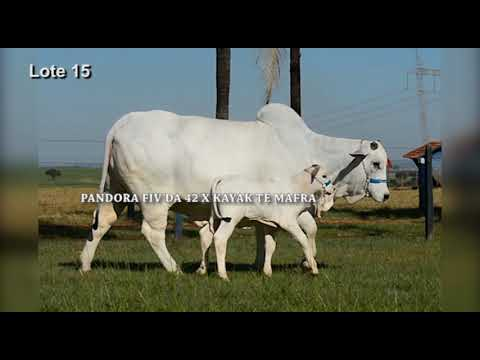 LOTE 08 - PANDORA FIV DA 42   CLR 5428