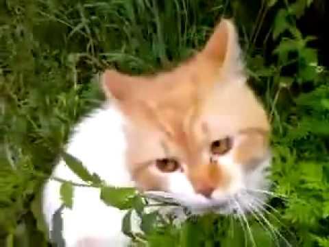 Кот кричит: ОООО!ЧУВАКИИИ!