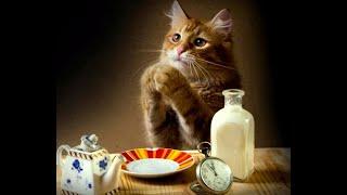 кот просит есть и нализывает холодильник