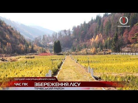 На Тячівщині лісівники проводять кампанію з лісовідновлення