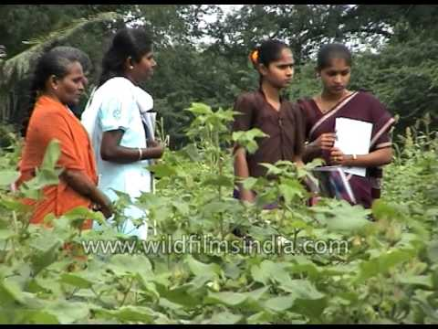 Students study organic farming model in India, inspect crop pests