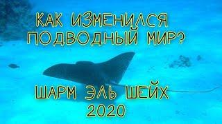 ОТДОХНУВШЕЕ МОРЕ ШАРМ ЭЛЬ ШЕЙХА СКАТ В КРАСНОМ МОРЕ ШАРМ ЭЛЬ ШЕЙХ 2020