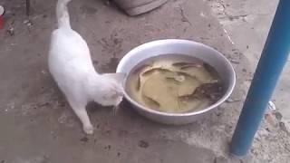 Кот ловит рыбу. Cat Goes Fishing. Cat catches fish.