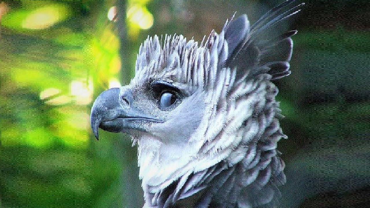 10 Most Beautiful Eagle Birds in the World