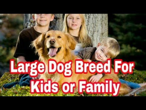 "Top -10 Best Large Dog Breed For Kids and Family / by ""Aryan Dog Club"" Aryandogclub"