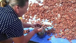 Как сушить и сохранить абрикосы на зиму