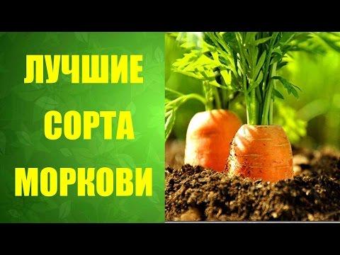 🌱Какие сорта моркови являются лучшими #живыевитамины🌱