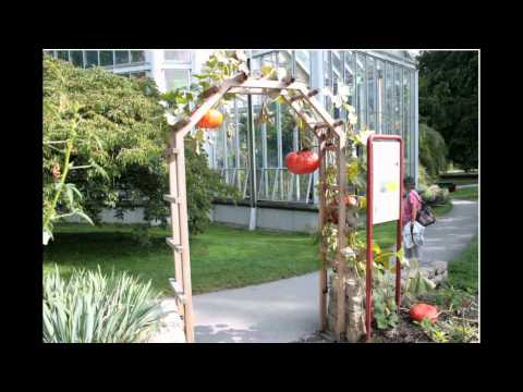 backyard-wedding-decorations