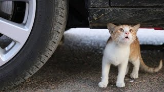 Crushing Crunchy & Soft Things by Car! EXPERIMENTS - CAT VS CAR TEST
