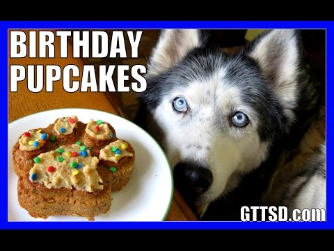 BIRTHDAY CUPCAKES for the DOG How to Dog Birthday Pupcakes Recipe DIY | Snacks with the Snow Dogs 33