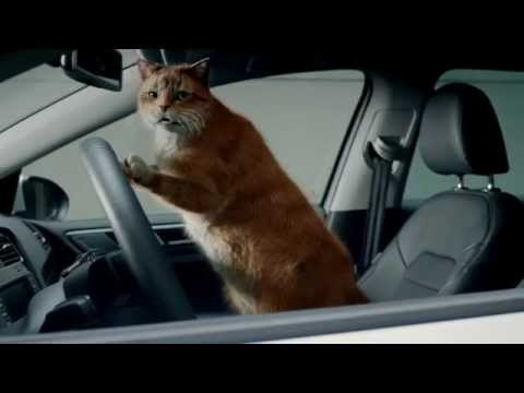 "VW Leasing ""Cat"""