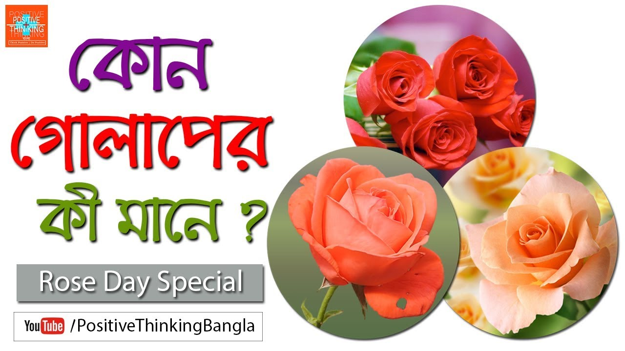 What Is The Meaning Of A Rose Rose Day Special Positive