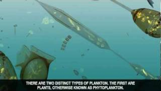 The Power of Plankton